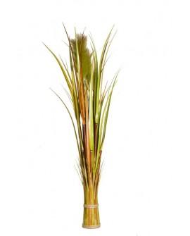 REED BARREL GRASS