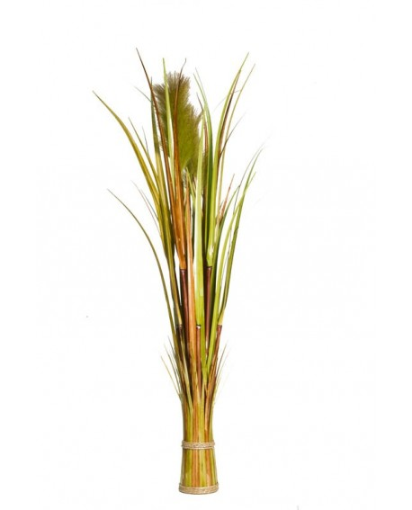 REED BARREL GRASS