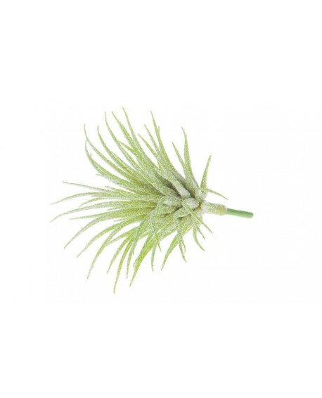AIRPLANT 5PC ARTIFICIAL 7.5x6