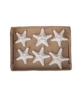 Caja Estrellas de mar 5-7cm 6pc 10x10x3cm