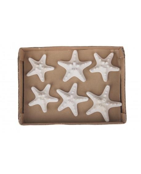 Estrellas de mar 5-7cm 6pc 10x10x3cm