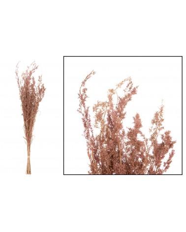 Alfonso grass 100cm 100gr