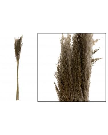 Pampas grass 100cm 6pc