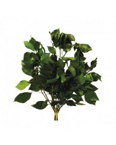 Hiedra pres verde 40/50 cms, 150 grs