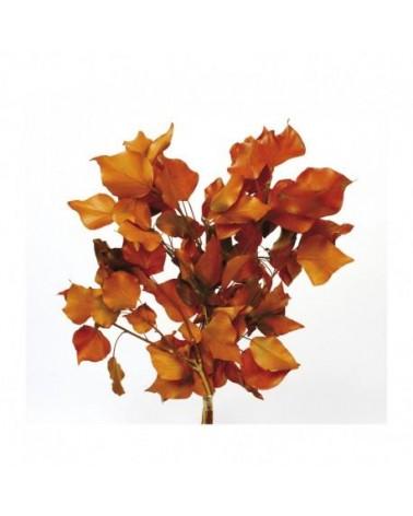 Hiedra pres  color 40/50 cms, 150 grs